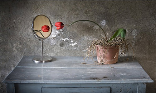 Beginners Guide to Successful Still Life Photography