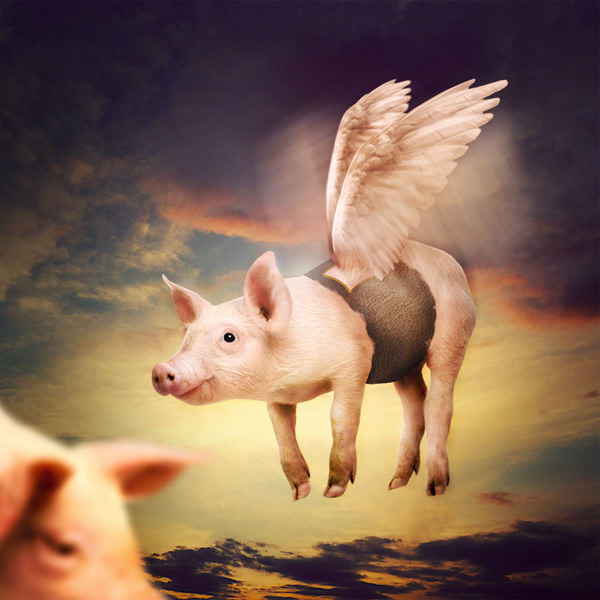 Photo Manipulate a Cute Flying Pig Scene