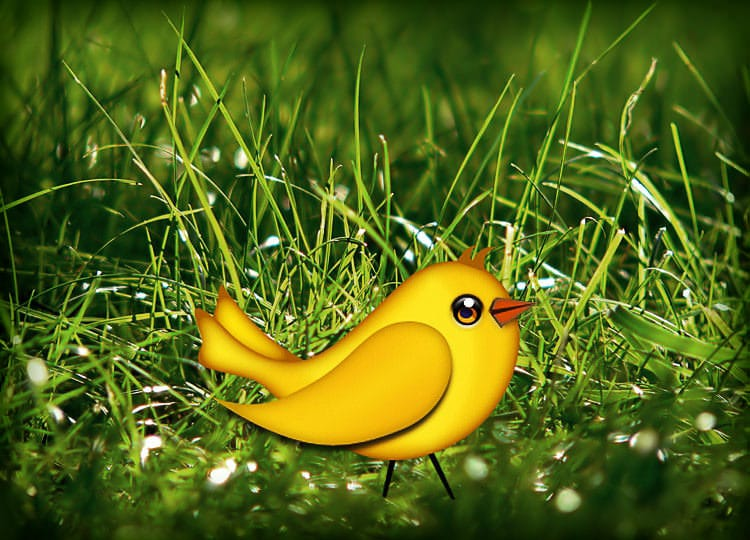 Let's create a cute bird vector in Photoshop