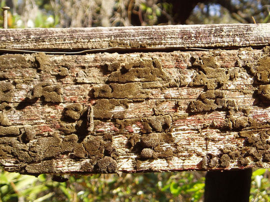 15 Rotten And Decayed Wood Texture For Free Download