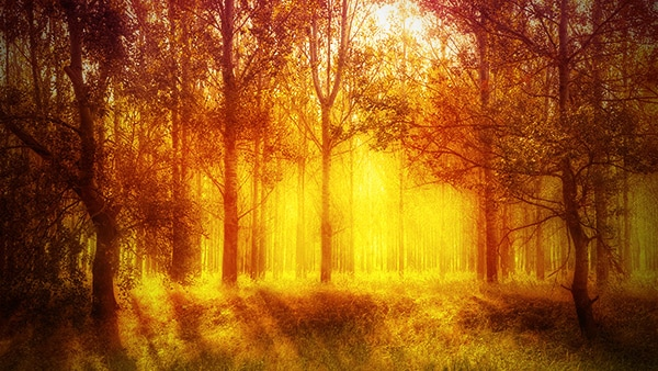 Add a Warm Atmosphere Effect to a Forest Image with Photoshop